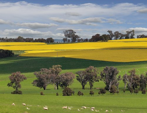 5 Farm Insurance Quote Tips